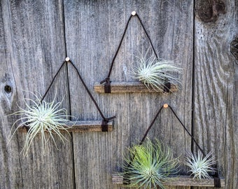 Set of Three Hanging Wood & Suede Air Plant Holders In Dark Brown with Four or Six Air Plants (Copper Nails Included) - Best Seller!