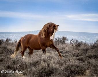 "The Power of ""Blazer"" Wild Stallion of Sand Wash Basin - 12x18 Gallery Wrapped Canvas Print"