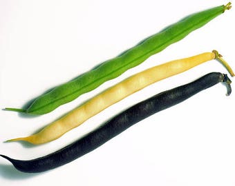 Multi Coloured Bean Collection - 15 seeds