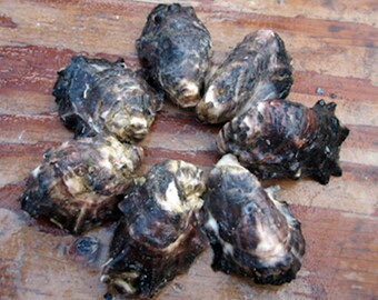 2 Dozen CUP Side Oyster Shells from Cortez Island British Columbia
