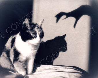 cat photograph, dark shadows, black and white photo, cat lover gift, halloween, vintage classic horror style, photography