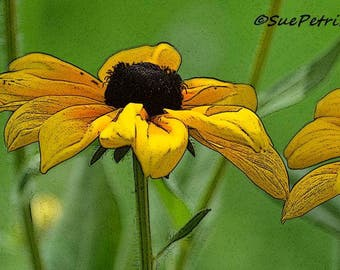 Yellow Flower Photos, Fine Art Photograph, Greeting Card or Fridge Magnet, Black Eyed Susan, Bedroom Decor, Garden Art, Cottage Chic, Yellow