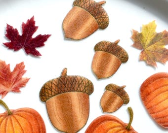 Edible Acorns Autumn Wafer Rice Paper Rustic Fall Oak Boho Golden Chocolate Brown Wedding Cake Decorations Thanksgiving Cupcake Toppers