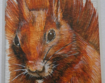 Original watercolour mounted aceo of a red squirrel