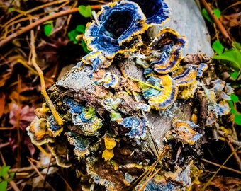 Purple Fungi Print - Jessica Mason Photography