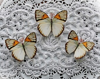 Reneabouquets Original Butterfly Set - Harmony Premium Paper Butterflies