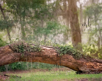 3 Forest Fairy Tree digital backgrounds / backdrops