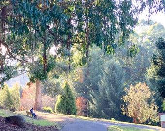 Autumn in Mt. Dandenong, Melbourne, Australia