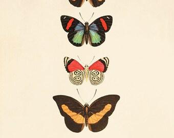 Vintage Butterfly art print Garden art print Cottage art Victorian print 1800s Antique wall art Nature wall art Home decor prints Butterfly