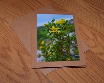 Chaparral Photography Print or Note card