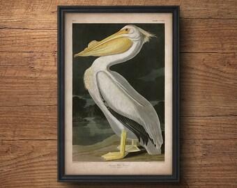 Audubon bird print, Pelican print, Antique bird print, Audubon poster, Birds of America, Large wall art, Nursery art, Wall decor, Large art