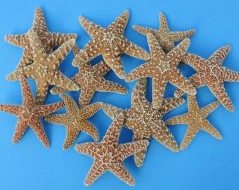 "Sugar Starfish 4"" - 6"" - 4 Pieces - Beach Decor - Beach Wedding Decor - Craft Supplies"