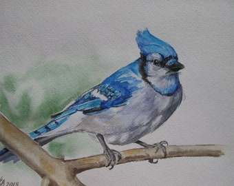 "Blue Jay original watercolor painting Handmade 8""x 12"" bird, paintings, small picture"