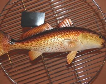 "2, 11"" Redfish, free ship, Replica Redfish, redfish mount, redfish to make a trophy mount, fish trophy mount supplies,#28"
