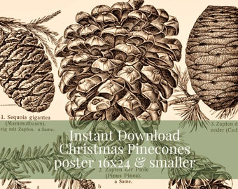 INSTANT DOWNLOAD Christmas Pine Cones Poster 16x24 and Smaller