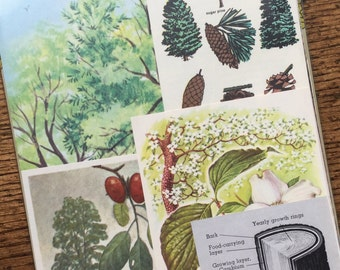 Our Friends the Trees Vintage Nature Collage, Scrapbook and Planner Kit Number 2145