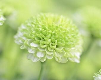Mum Flower Photography, Girls Room Decor, Floral Gifts For Her, Peaceful Wall Art, Green Bathroom Art, Modern Farmhouse Decor, Botanical Art