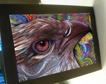 Greeting card print of original art- colorful hawk bird Zentangle