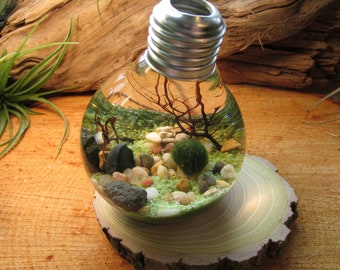 Marimo Terrarium - Reclaimed Light Bulb with Living Moss Ball - Underwater Terrarium