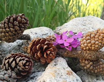 Real Pinecones on Twigs - Wyoming Pine Cones - Wedding Decor - Country Decor - Country Crafting - Pinecones - Pine Cones - All Natural