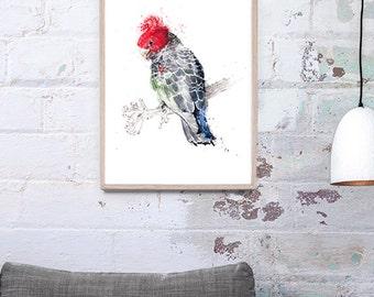 Gang-gang cockatoo Art Print A3, A2 & A1 Bird Watercolour Illustration giclee art print