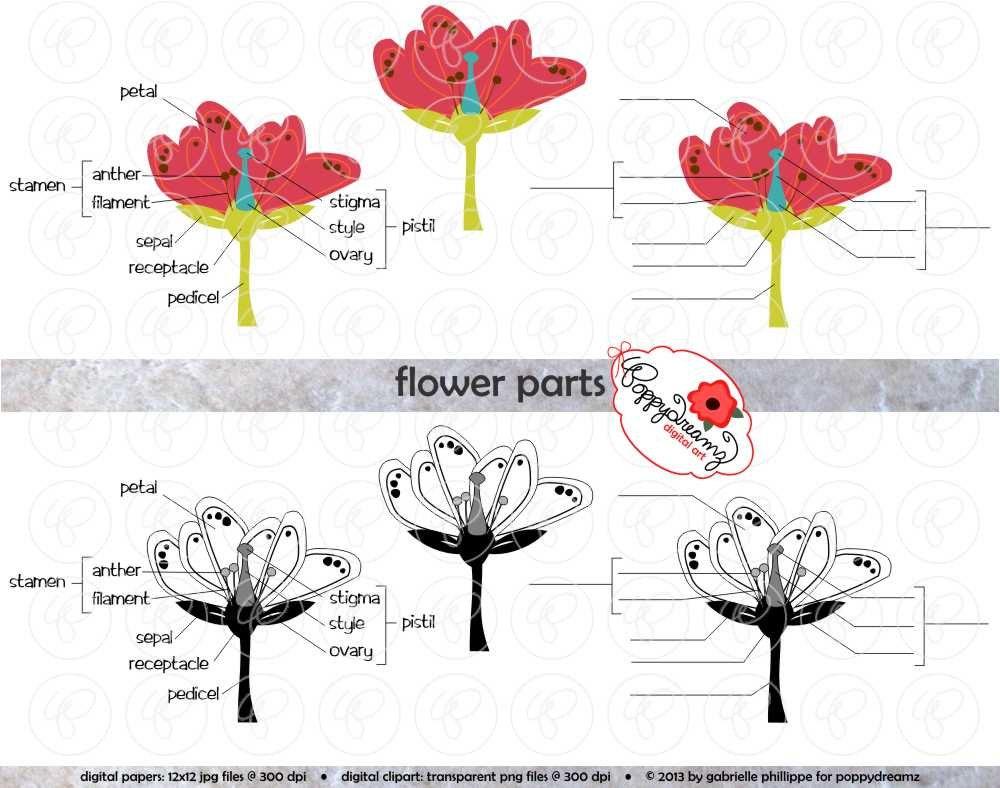 Flower Parts Science Diagram Clipart Set 300 Dpi School