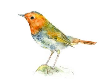 Japanese Robin watercolor painting - bird watercolor painting - 5x7 inch print - 0170