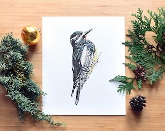 Williamson's Sapsucker Woodpecker Fine Art Watercolor Print