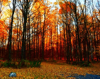 The End of the Road in Autumn Art Photography Print Fall Forest Colors Autumn Trees Wall Art