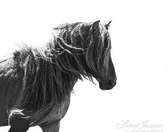 Sable Island Stallion's Profile -Fine Art Horse Photograph - Horse - Sable Island - Wild Horse - Black and White -Fine Art Print