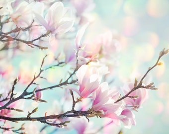 Nature Photography, Magnolia, Spring Flowers, Pink, Sunny, Pastel, Wall Art, Shabby Chic