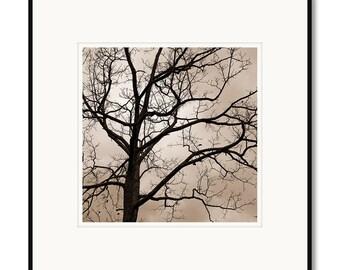 Walnut tree, appalachia, rural, Franklin County, Virginia, photography, black and white, sepia warm tone, framed photo by Adrian Davis