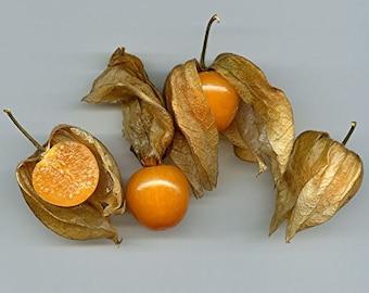Physalis Peruviana Golden Berry groundcherry, Inca Berry Cape Gooseberry seeds 100 PCS