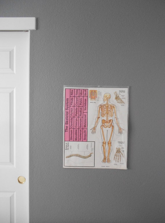 1980s skeletal system chart poster size / skeleton / anatomical / medical / school