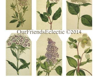 Printable botanical tags, digital tags, botanical flowers, scrapbooking, gift tags etc, you print