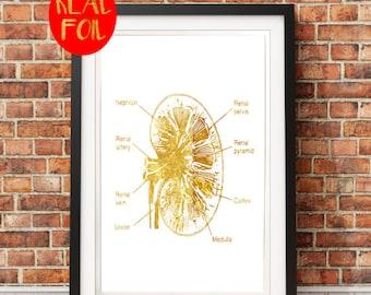 Human Kidney medical gift doctor student  Gold Foil Print  Gold Wall Art  Gold Mural Prints Vintage Foil