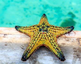 Starfish Photography, Yellow Starfish, Starfish Print, Colorful Starfish Art, Starfish Picture, Starfish Fine Art Print, Beach Photography