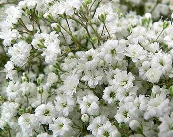 Gypsophili flower seeds,104, flower seeds, gardening, wedding flower, white baby's breath,