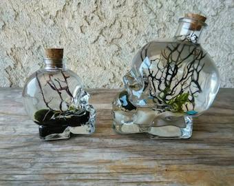 Marimo and Christmas Moss Terrarium - Live Aquatic Plants - Clear Skull - Custom