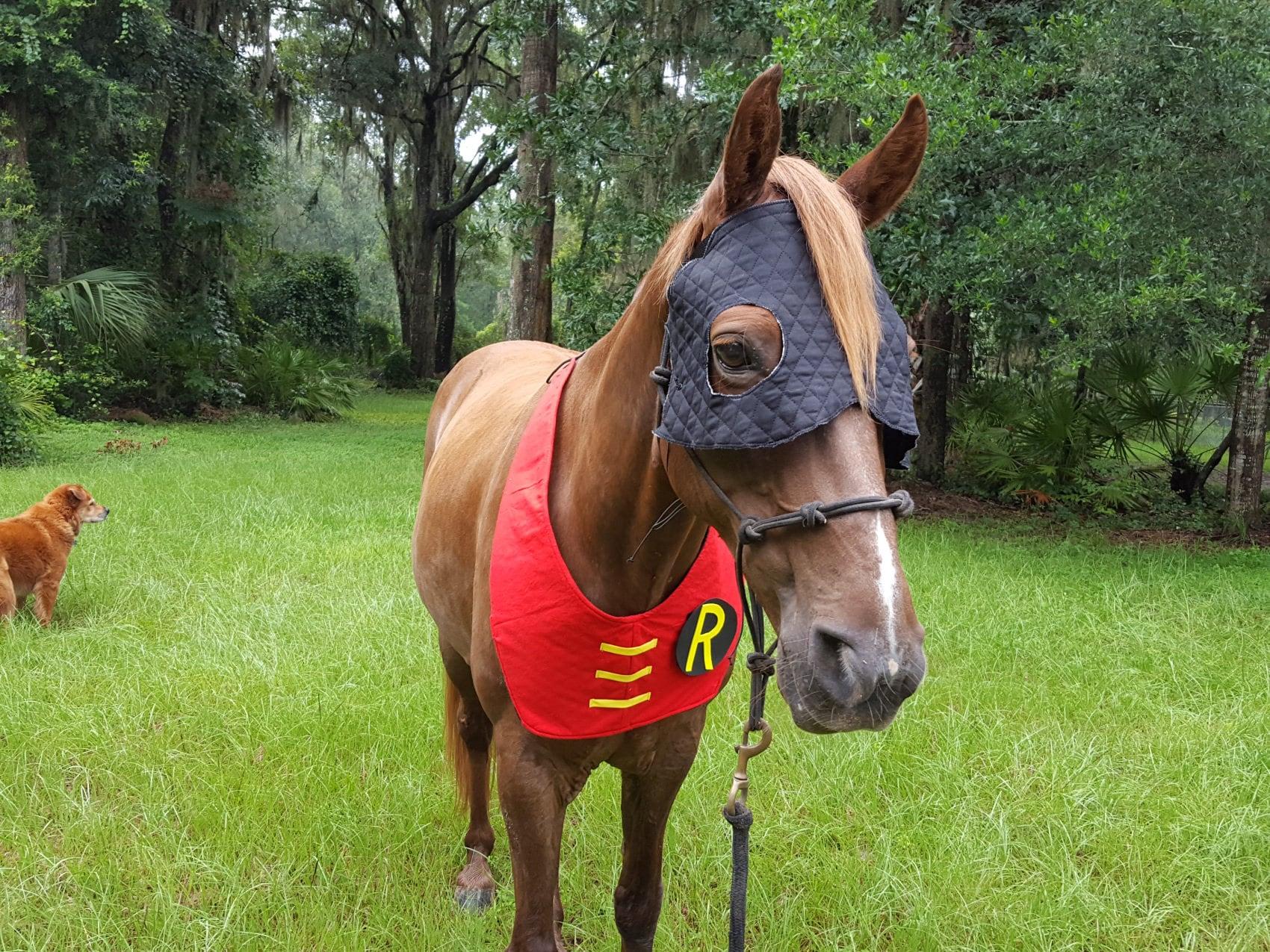 miniature horse arizona, miniature driving gelding for ...   Mini Horse Costume