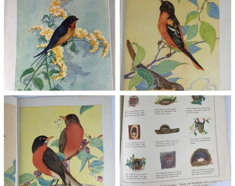 "Vintage 1943 Addition of Oversized Book of ""Birds"" illustrations by Fern Bisel Peat"