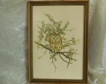 Owl Picture, Vintage Saw Whet Owl Print by Martin Glen Loates, Vintage Owl Print