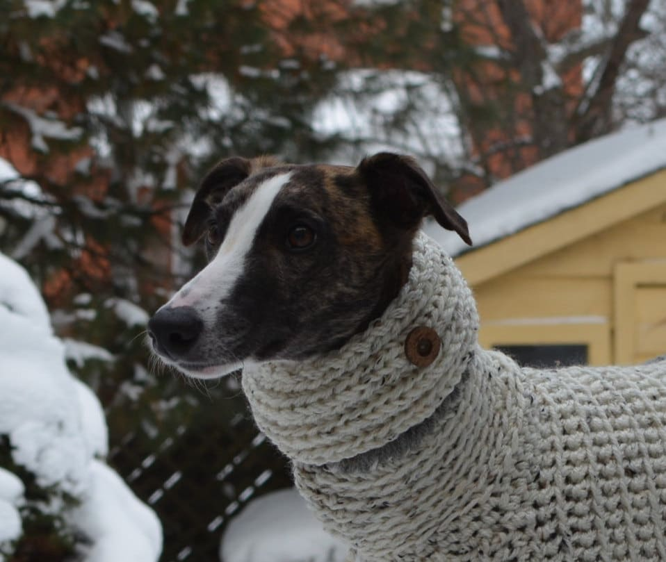 Whippet Clothing Knit Dog Cowl Whippet Cowl Dog Cowl Dog Snood