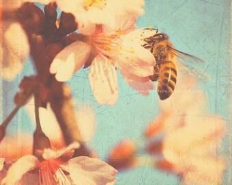 nature photography, bumble bee print, blue decor, garden wall art, cherry blossoms art, large nature poster, 30x30 print, kids room