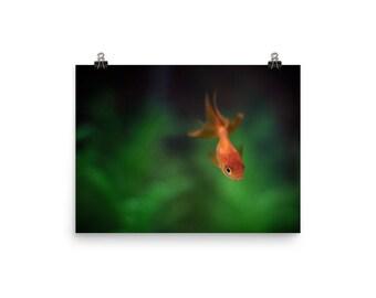 Art Poster | Goldfish