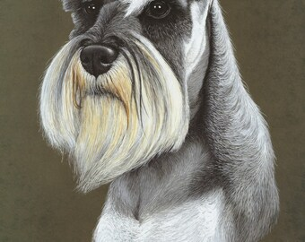 Miniature Schnauzer Print by Pamela Ryan