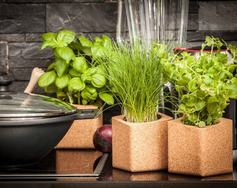 Indoor Herb Garden Kit - 2 Authentic Cork Planters with 4 Tasty Herbs Seeds To Try - All You Need To Grow Your Own Herbs At Home By HerbsIn