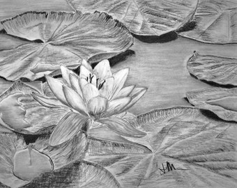 Water Lily - charcoal drawing print