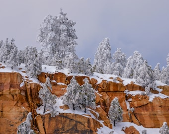 Winter, Southwest,  Snow, Trees, Red Rock, Arizona, Frozen, Landscape Photography, Digital Download, Photo