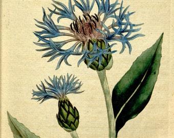 Flower print art, Nature decor, Antique print, Flower art, Vintage print, Vintage poster, 77